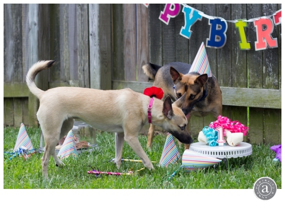 Rex & Sylvia turn one!