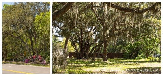 Love all the Spanish Moss!!